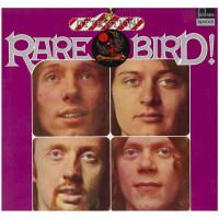 Attention! Rare Bird!